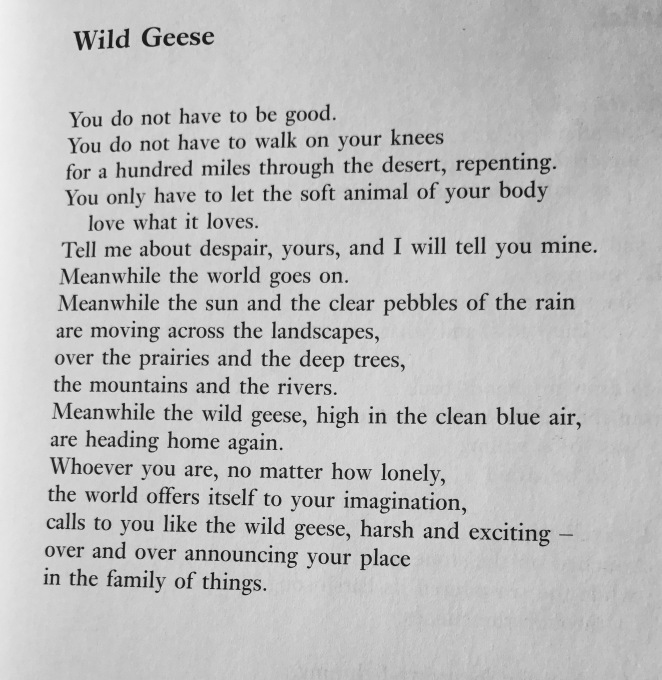 wild-geese-mary-oliver