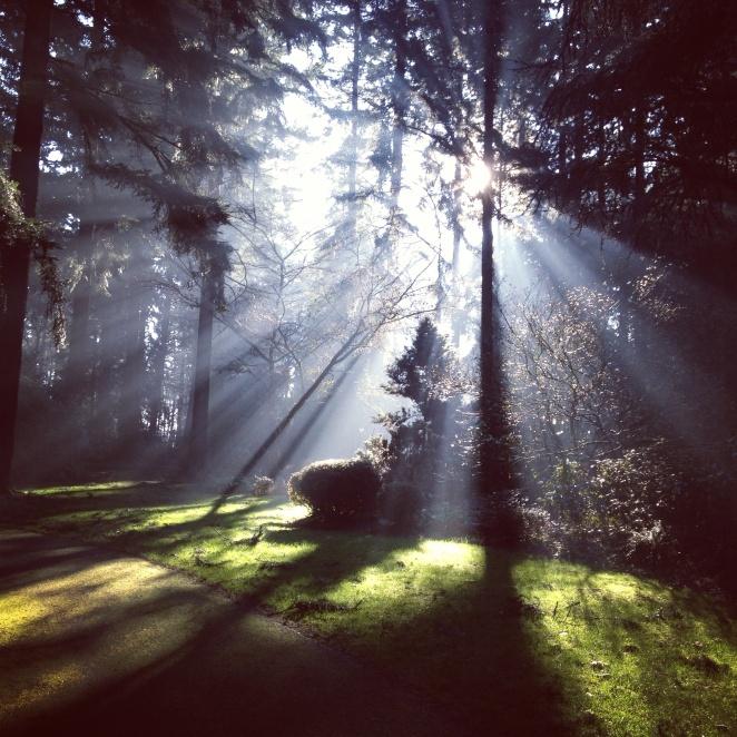 woodland-greg-becker